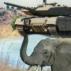 War Machine, South Africa, Elephant, Army, African, Military, Apartheid, Animals, Vehicles