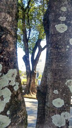 Árvores em perspectiva...
