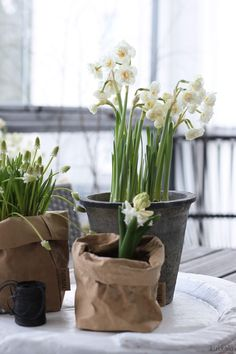 KUKKALA: #helmililja #perunanarsissi #hyasintti Easter Festival, Flower Power, Spring Bulbs, Spring Is Coming, Spring Home, Daffodils, Spring Flowers, Flower Arrangements, Beautiful Flowers