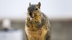 Former hacker turned security researcher Cris Thomas has put forward a compelling case for why squirrels pose a far greater threat to critical infrastructure around the world than cyber attacks.