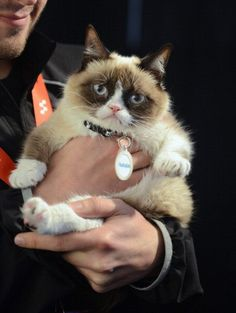 Tardar Sauce aka 'Grumpy Cat' is set to star in a Hollywood movie. This is the cutest picture of Grumpy Cat I have ever seen! Cute Cats, Funny Cats, Funny Animals, Cute Animals, Crazy Cat Lady, Crazy Cats, Grumpy Cat Humor, Grumpy Kitty, Kitty Kitty