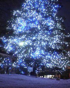Christmas tree, Sapporo, Hokkaido, Japan  ~ Ʀεƥɪииεð╭•⊰✿ © Ʀσxʌиʌ Ƭʌиʌ ✿⊱•╮