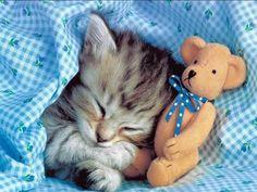 V-Kittens - Zadováženie mačky - Mačka a snívanie
