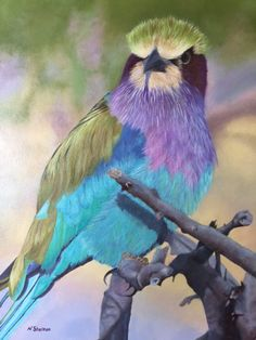 Nicky Shelton - Painting - Bird - Purple - Blue Lilac Breasted Roller