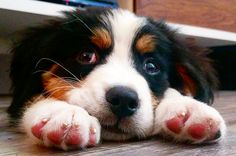 26 Struggles Every Dogless Dog-Lover Will Understand