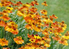 Better Homes & Gardens site has great tips on gardening plus guides on many perennial favourites.