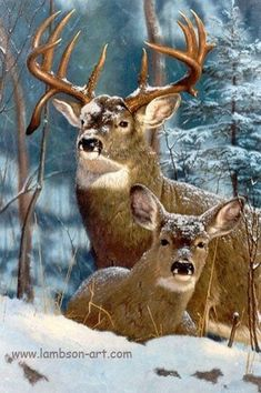 majestic deer in the snow Whitetail Deer Pictures, Deer Photos, Wildlife Paintings, Wildlife Art, Beautiful Creatures, Animals Beautiful, Animals And Pets, Cute Animals, Deer Family