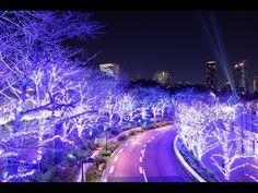 「東京ミッドタウン」の夜景壁紙・写真 hi-rocky