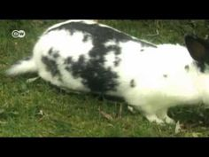 Blog — Die Sprachfee Goats, Rabbit, Blog, Animals, Bunny, Easter Activities, Rabbits, Animales, Animaux