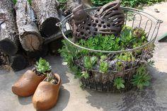 Vintage egg basket of succulents Planting Succulents, Garden Plants, Garden Birds, Mailbox Planter, Flea Market Gardening, Upcycled Garden, Garden Junk, Egg Basket, Garden Styles