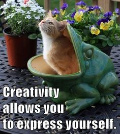 Growth Mindset & Feedback Cats: Creativity allows you to express yourself. Growth Mindset, Funny Cats, Creativity, Memes, Animals, Inspiration, Biblical Inspiration, Animales, Animaux