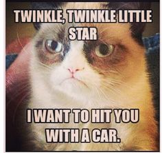 Omg I love the grumpy cat!!!