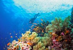 Family diving/snorkelling holiday in the Red Sea