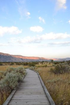 May 2020 - The Osoyoos Desert Centre is a 67 acre nature interpretive facility where visitors can learn about desert ecology, habitat restoration and conservation of endangered ecosystems in the South Okanagan. What To Do Today, British Columbia, Habitats, Places To See, Trip Advisor, The Good Place, Things To Do, Deserts, Country Roads