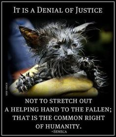 Do not look the other way when an animal is in need of help............even if the Shelters  are full.