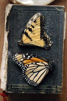 Butterflies: The taste of Petrol and Porcelain | Interior design, Vintage Sets and Unique Pieces www.petrolandporcelain.com Authentic Fauxhemian