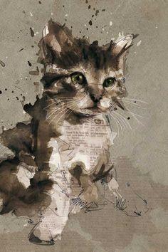 Newspaper cat!