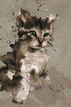 Newspaper cat!