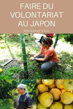 Faire du volontariat au Japon, un volontariat Workaway sur la Péninsule d'Izu dans le cadre du projet The Other House. A la découverte de la Péninsule d'Izu au sud de Tokyo et de toutes ses beautés. #izu #japon #izupeninsula #japan #workaway #volontariat #wwoofing #theotherhouse #voyage #slowtravel #pvtjapon
