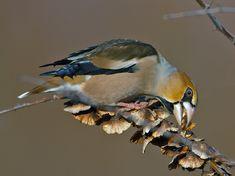 Bird Houses, Natural Beauty, Birds, Nature, Denmark, Garden, Animaux, Animals, Naturaleza