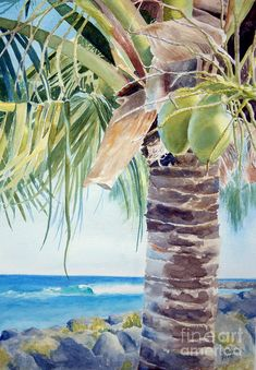 two coconuts -SOLD Canvas Print by Lisa Pope Tree Watercolor Painting, Watercolor Pictures, Watercolor Artists, Watercolor Landscape, Landscape Paintings, Beach Watercolor, Illustration Botanique, Tree Illustration, Deco Jungle