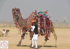 camel fantasy