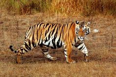 """""""Dictators ride to and fro on tigers from which they dare not dismount. And the tigers are getting hungry."""" -- Winston Churchill"""