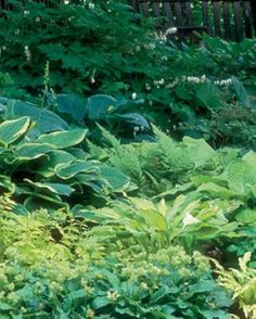 Designing with Hostas | Fine Gardening