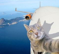 Why not... Happy Friday!!! ✈️ #selfiecat #GoPro