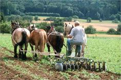 Farm With Animals, Crop Protection, Amish Farm, Farm Images, Farmer's Daughter, The Future Is Now, Farms Living, Vintage Farm, Draft Horses