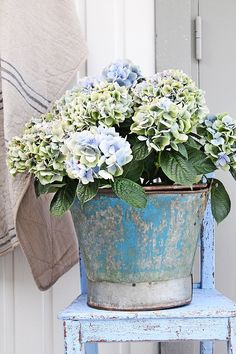 Blue chair, bucket, and hydrangeas