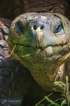 27 photos that will transport you to the Galápagos Islands | The Planet D Adventure Travel Blog | The Galapagos Islands are often referred to as a living museum and once you witness the photos... you will understand why.: