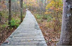 woods path Wood Path, Paths, Woods, Diy, Bricolage, Woodland Forest, Do It Yourself, Forests, Homemade