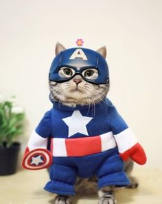 52 ideas funny dogs dressed up halloween for 2019 Funny Kid Costumes, Pet Costumes, Halloween Costumes, Halloween Ideas, Cute Animal Drawings, Cute Animal Pictures, Cat Birthday Wishes, Happy Birthday, Captain America Halloween