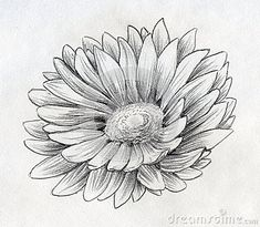 Daisy Flower Drawing Tattoo