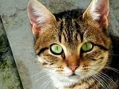 Olhos de Gato   Fotografia de jcbc   Olhares.com
