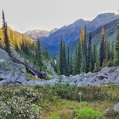 Hike 15 minutes past the Kokanee Glacier Cabin and you're rewarded with stellar views in all directions. As an FYI the cabin is one of the nicest ones you'll find in the backcountry in Canada