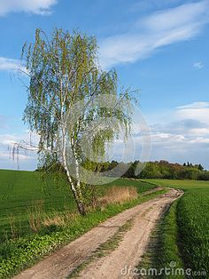 Download Birch And Road In Spring Royalty Free Stock Photo for free or as low as 0.64 zł. New users enjoy 60% OFF. 23,122,672 high-resolution stock photos and vector illustrations. Image: 40022535