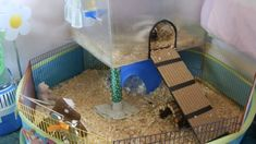 Giving Your Guinea Pig The Companionship It Needs. Photo by Jlhopgood Among the most commonly held beliefs when it comes to guinea pigs is that it is okay to keep just one on its own. Guinea Pig Hutch, Guinea Pig House, Indoor Guinea Pig Cage, Hamster Bin Cage, Guniea Pig, Class Pet, Little Pool, Bunny Cages, Small Animal Cage