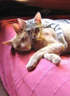 cat love<3   gatoseoutrosbichos:    elliott et loustic (by straycatspotter)