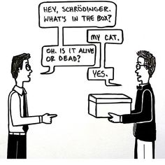Schrodingers Cat in the Box - dead or alive Physics Jokes, Math Memes, Science Memes, Science Humour, Physics And Mathematics, Quantum Physics, Schrodingers Cat, Quotes Gif, Nerd Humor
