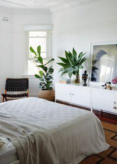bedroom plants - ficus lyrata and agave attenuata