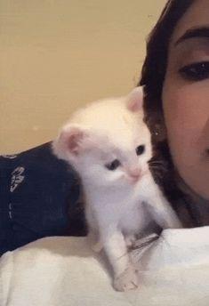 Kitten kisses back - Viral Videos Funny Animal Videos, Funny Animals, Cute Animals, Cute Baby Dogs, Cute Babies, Baby Kittens, Cats And Kittens, Kisses Back, Cat Gif