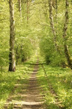 Forest path by Bastian Kienitz