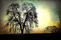 Majestic Oak by John Black on 500px