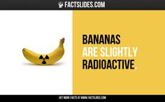 22 Facts about Fruits ←FACTSlides→ Bananas are slightly radioactive.