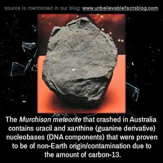 The Murchison meteorite that crashed in Australia contains uracil and xanthine (guanine derivative) nucleobases (DNA components) that were proven to be of non-Earth origin/contamination due to the amount of Alien Facts, Wierd Facts, Real Facts, Science Facts, Wtf Fun Facts, Funny Facts, Some Amazing Facts, Interesting Facts About World, Unbelievable Facts