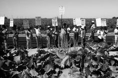 50th Anniversary of the United Farm Workers