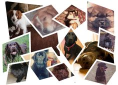 the Dogs i have owned in the past, i will miss you guys, always