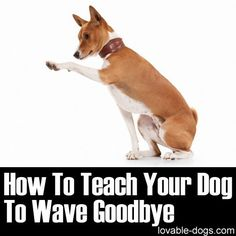 How To Teach Your Dog To Wave Goodbye ►► lovable-dogs.com/...